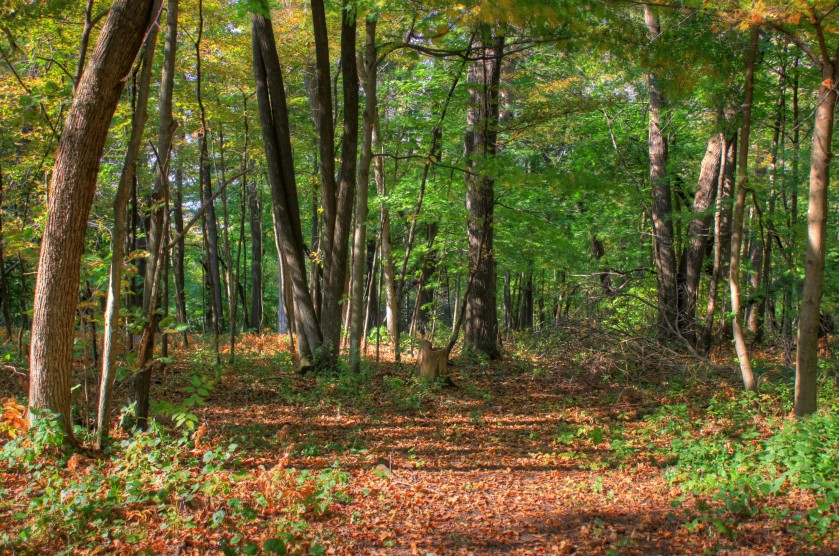 wisconsin-belmont-mound-state-park-fork-in-the-trail