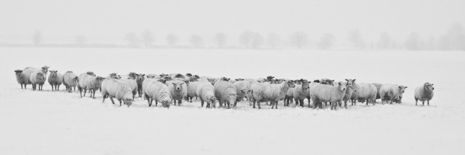 winter-1142029_1920